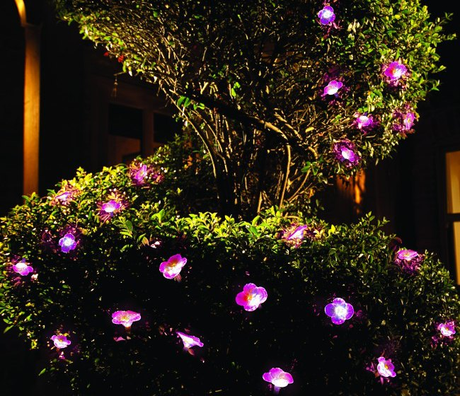 Lights in Petunia Garden