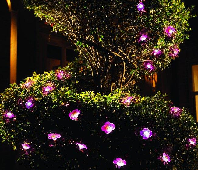 Lights in Petunia Garden